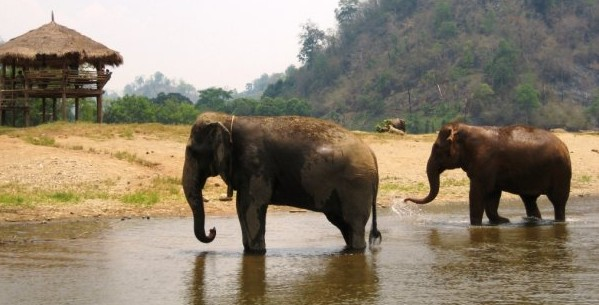 Episode 4: The Plight of Asia's Elephants with John Roberts
