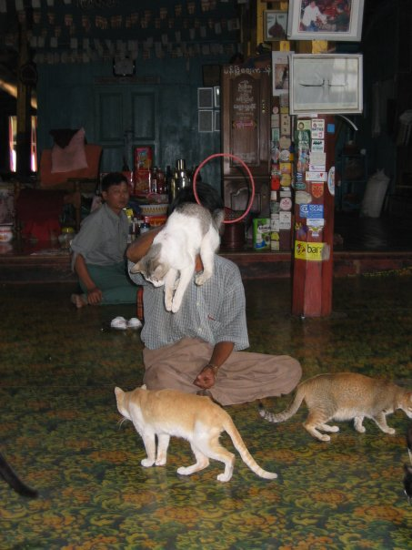 Travel in Asia podcast: Animal experiences in Asia - Jumping Cat Temple Inle Lake Myanmar