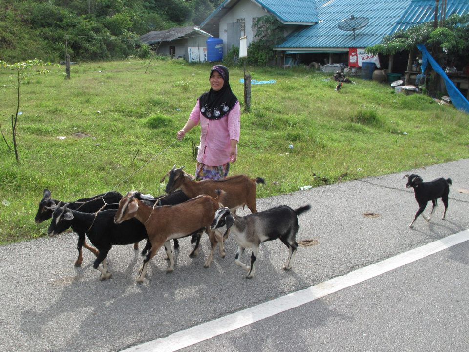 Travel in Asia podcast: Animal experiences in Asia - Walking the goats